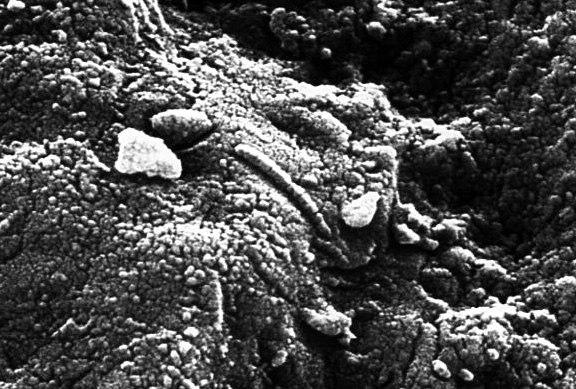 Метеорит ALH84001 под микроскопом