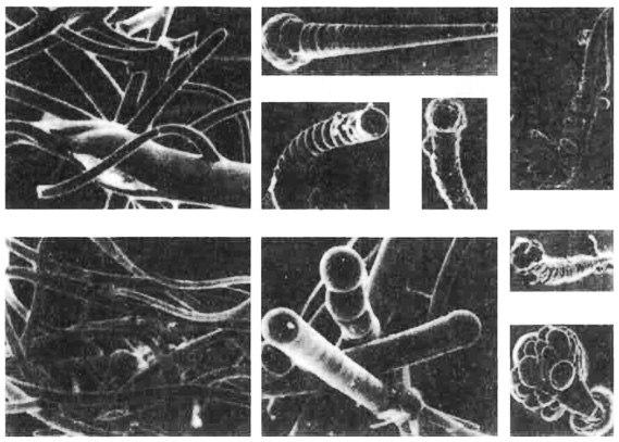 Углеродные кристаллы под микроскопом