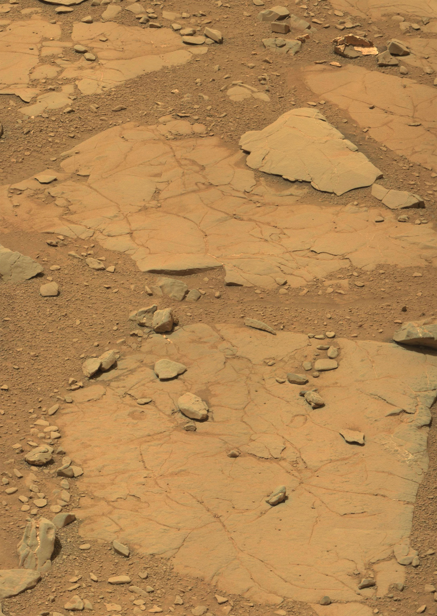 dinosaurs-in-mars-news (11)