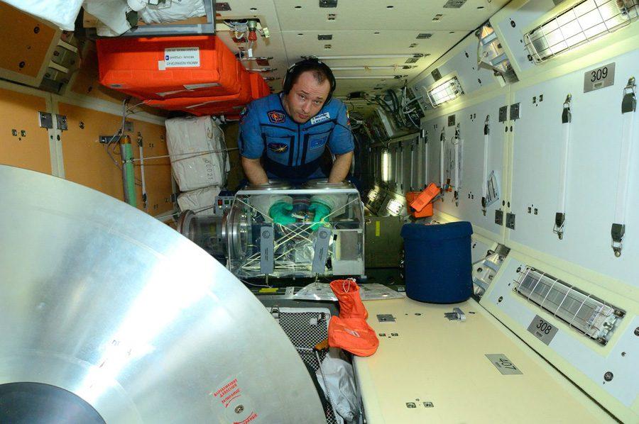 Эксперименты на МКС