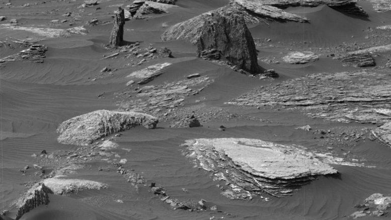 дерево на Марсе