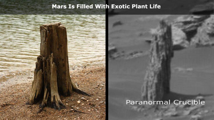 сравнение земного и марсианского пней