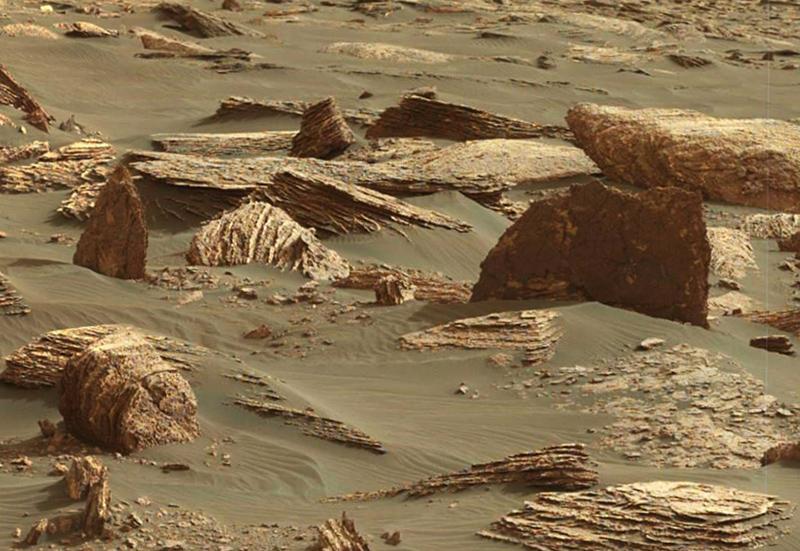снимок марсианского дерева с другого ракурса