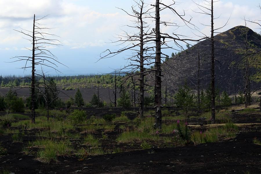 мертвый лес вокруг вулкана