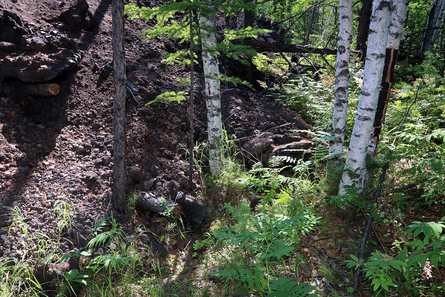 встреча лавы и леса